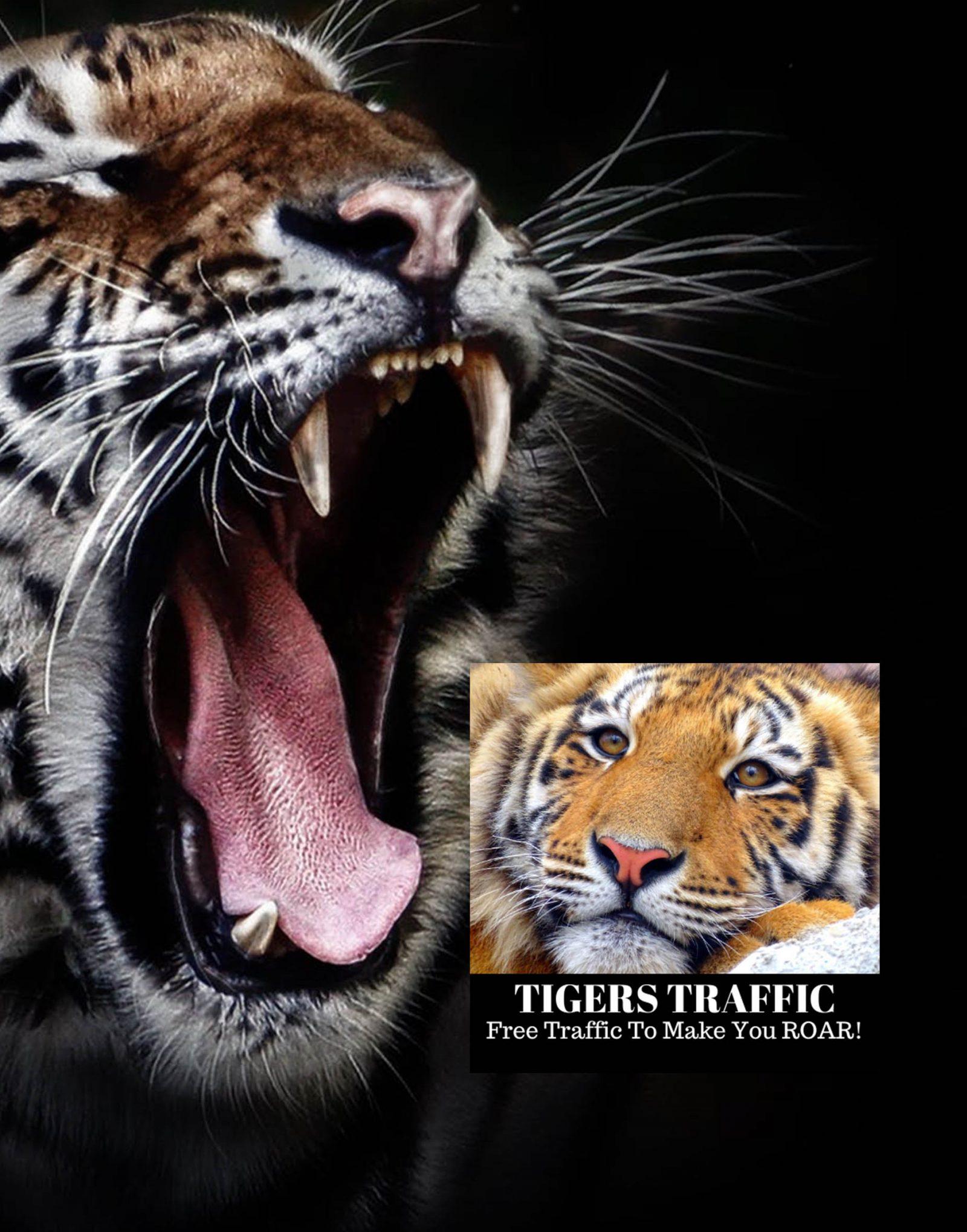 tiger traffic review 1